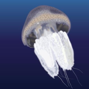 River Jellyfish