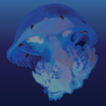 Red Cross Jellyfish (Lychnorhizae malayansis)