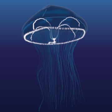 Eirene Jellyfish (Eirene menoni)