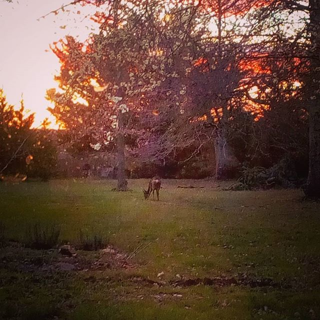 Shhhhh. A bright sunset with wild deer having a nibble in the grounds is always a great way to end to the day. Natural beauty at its best. #bordeaux #winecountry #vineyardhotel #bordeauxisbeautiful #winedestinations #winetravel #countrylife
