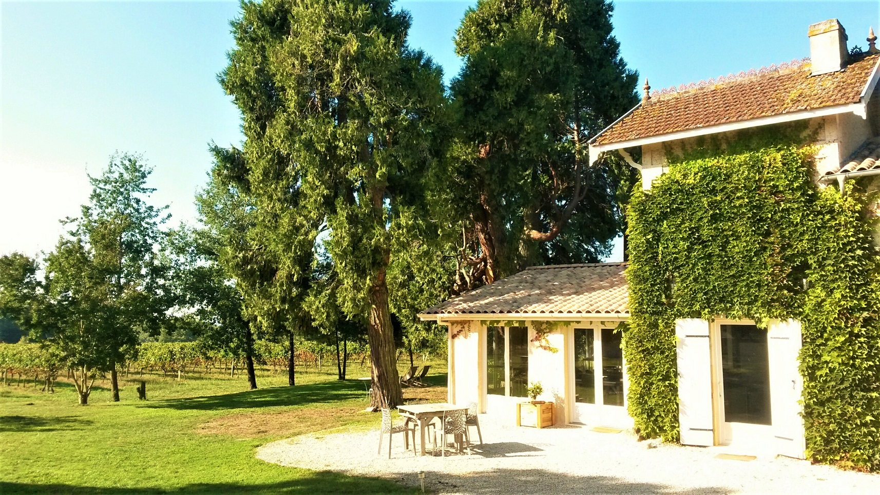 house to vines - Copy.jpg