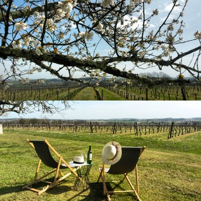 Cherry blossoms, sunshine & it's about that time of day. Happy apéro everyone! #bordeaux #vineyard #vineyardhotels #winedestinations #winelover #springtime #whitewine #sunshine