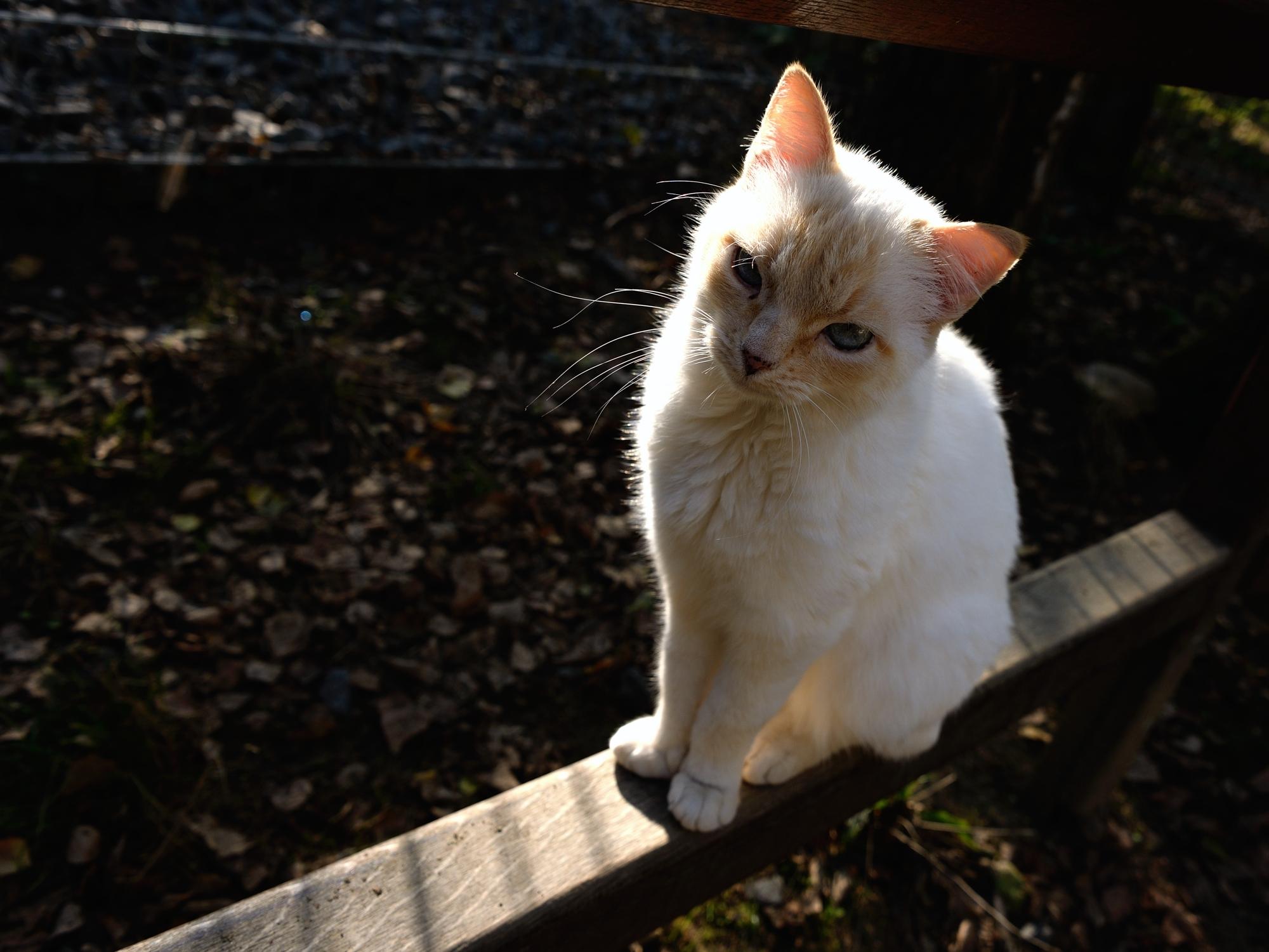Herr Meier, the resident cat