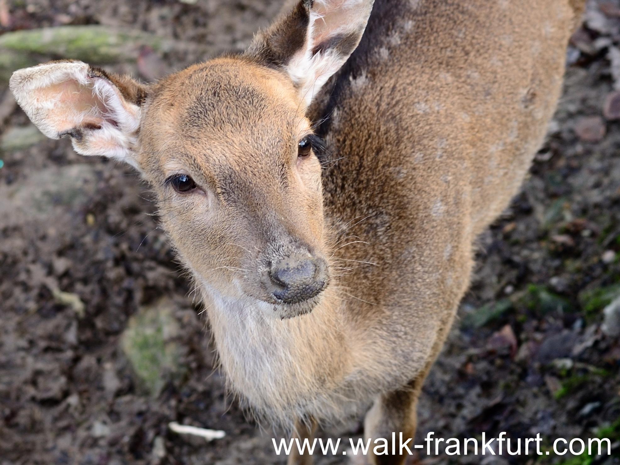 Deer pen