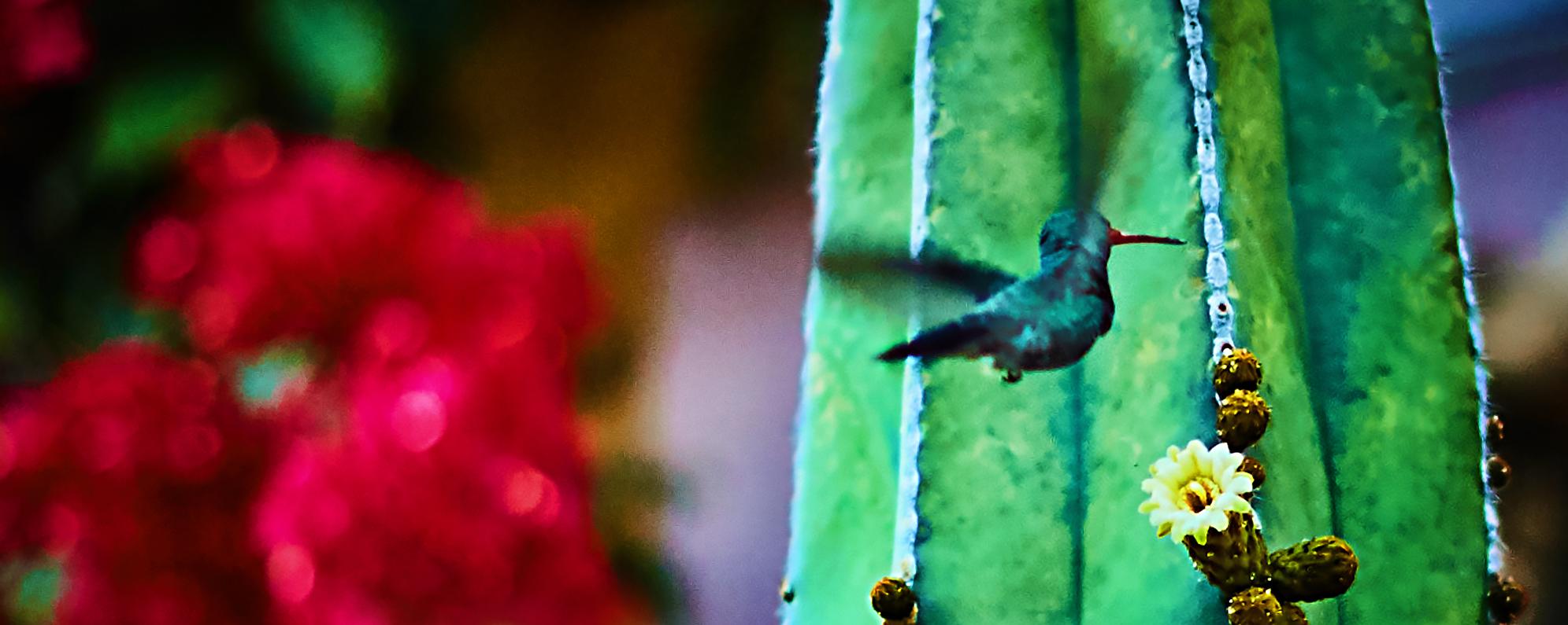 San Miguel de Allende 25 copy.jpg