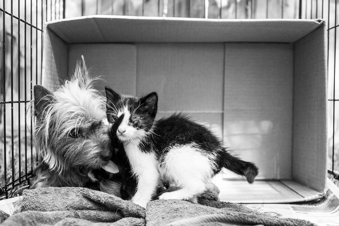 This Yorkie Who Nursed Two Abandoned Kittens As Her Own Remind Us Love Has No Limits