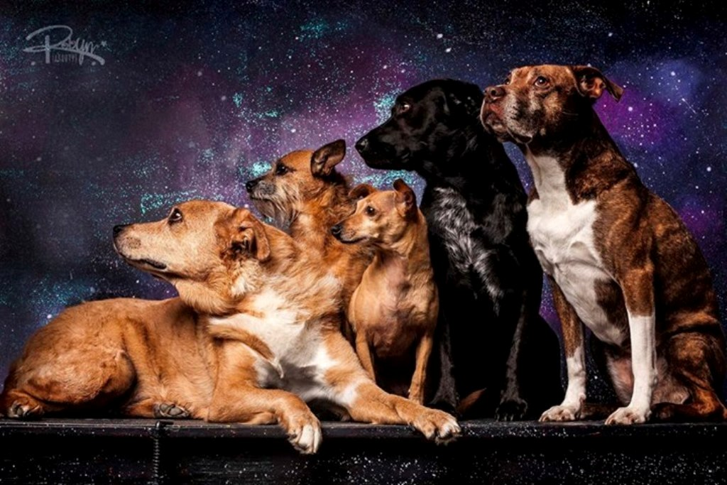 Top 10 Best Pet Photographers in the World
