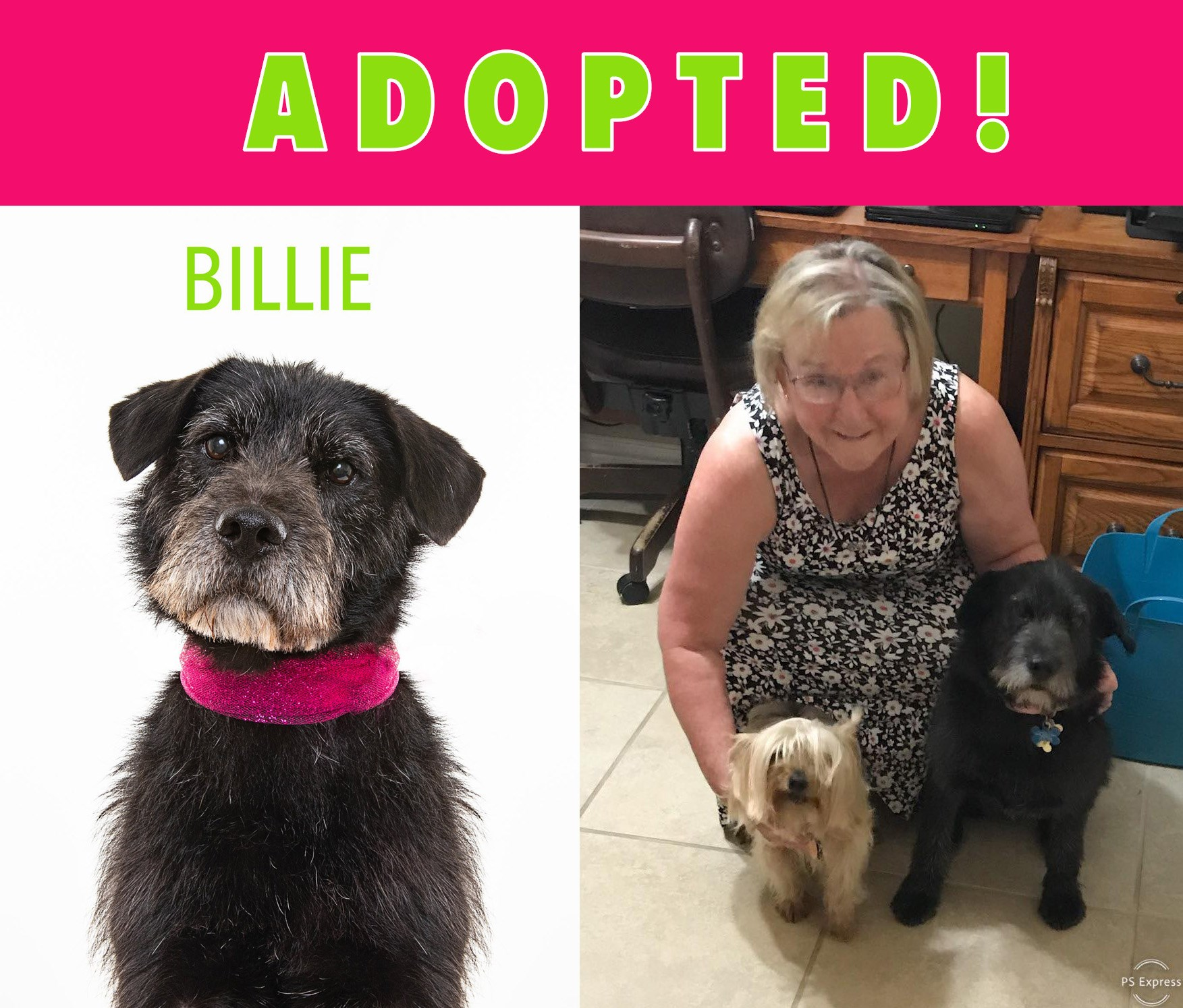 Billie Adopted.jpg