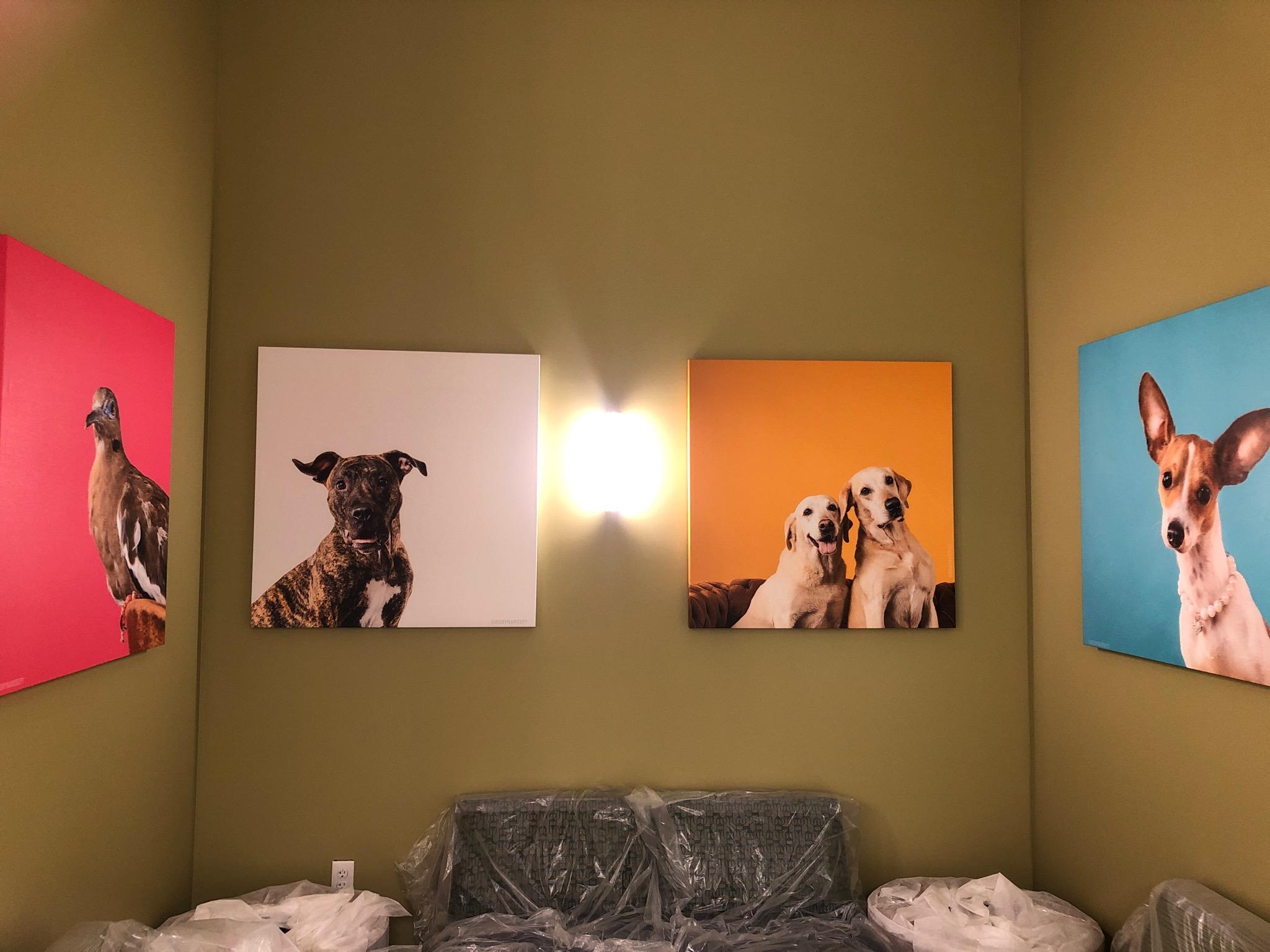 Robyn Arouty — Dog Photographer Houston - Pet Photographer Houston