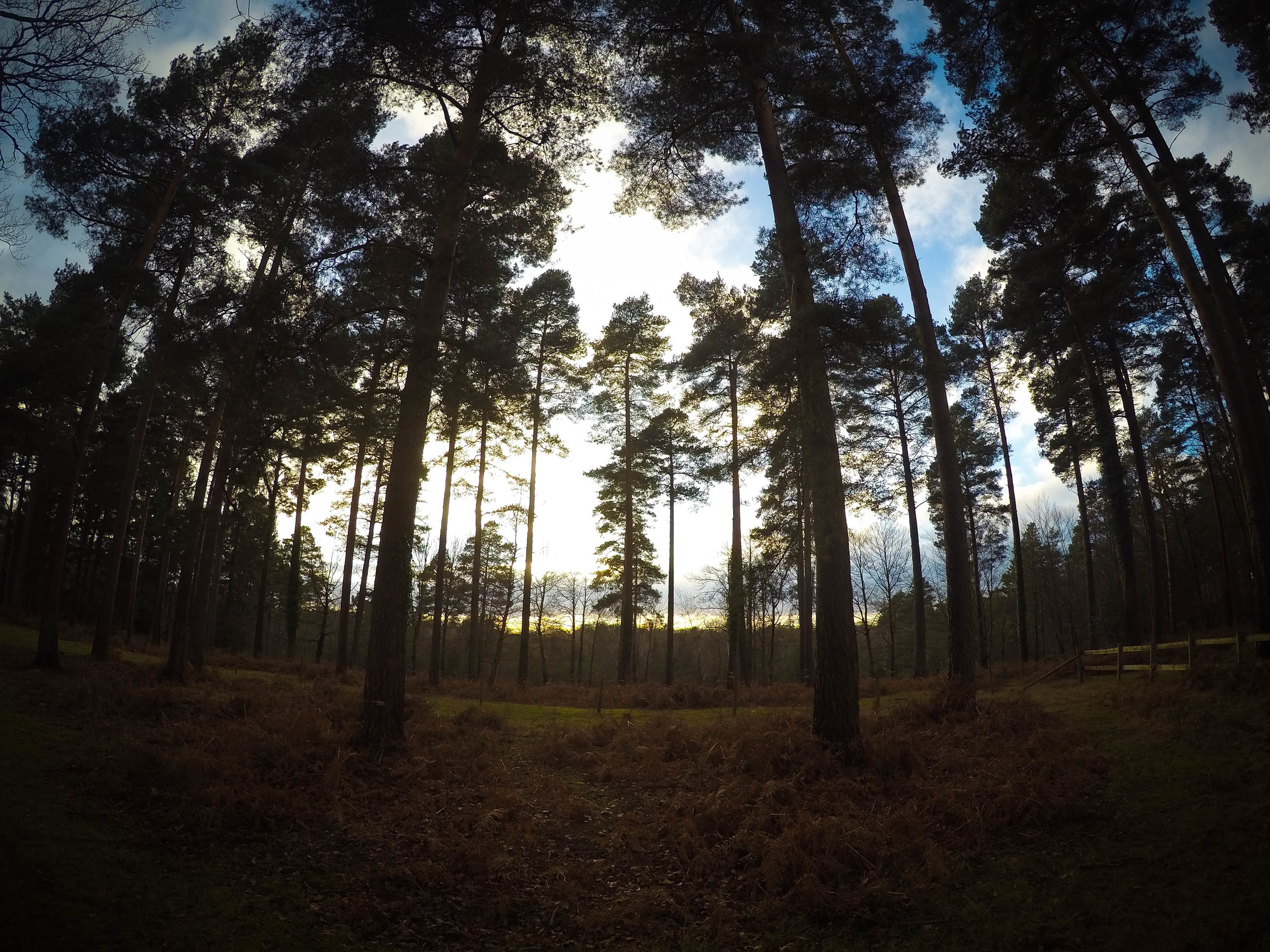 District Designs - New Forest Shoot