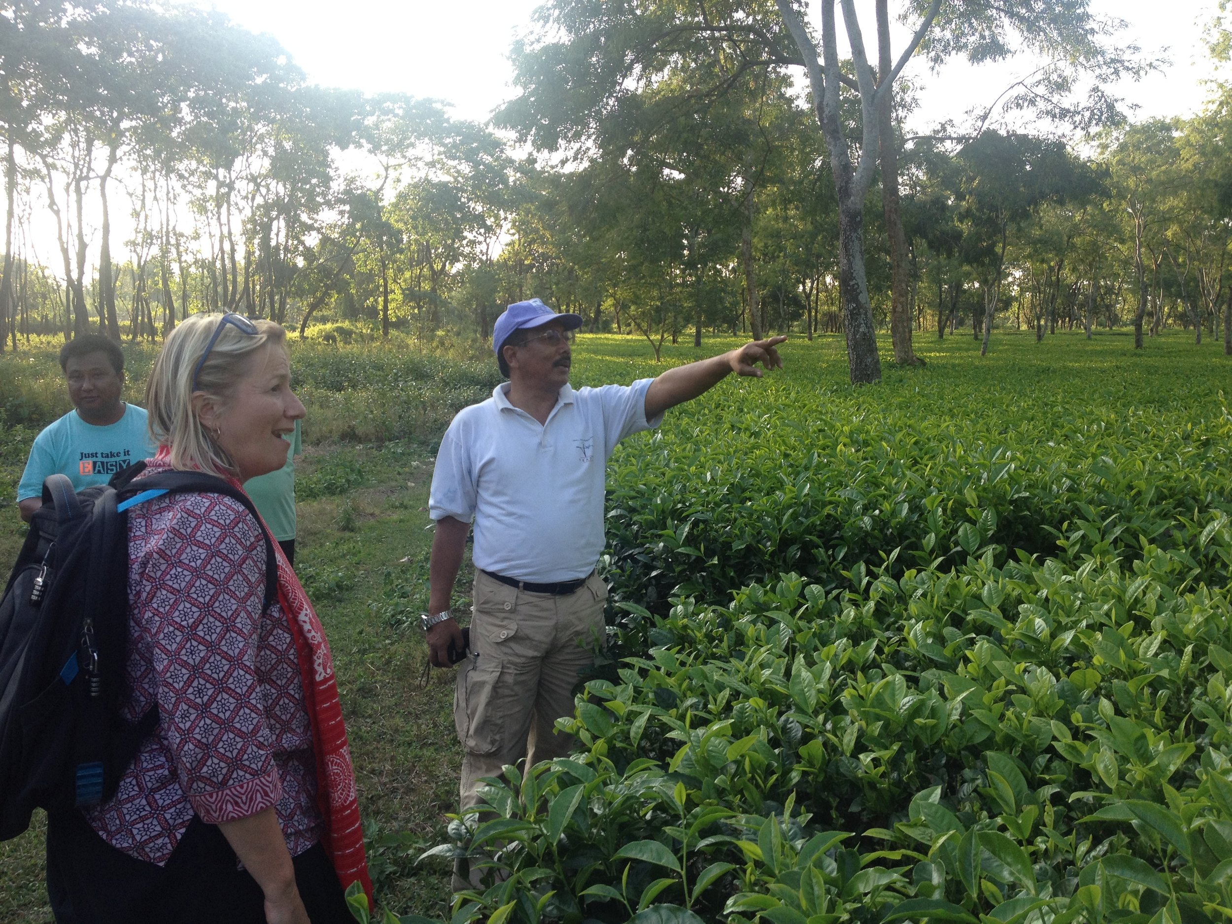 Designing impact investment opportunities for Indian tea farmers