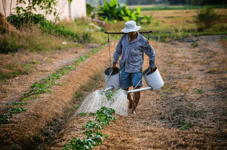Social Enterprise Smallholder Farmer
