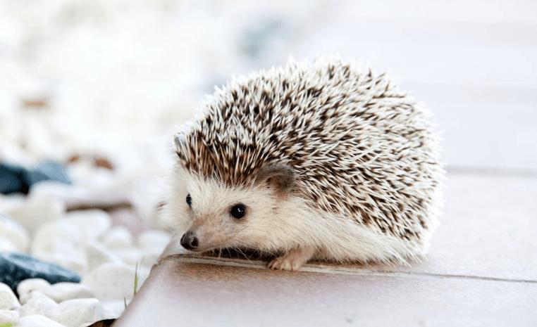 The Hedgehog Principle Example