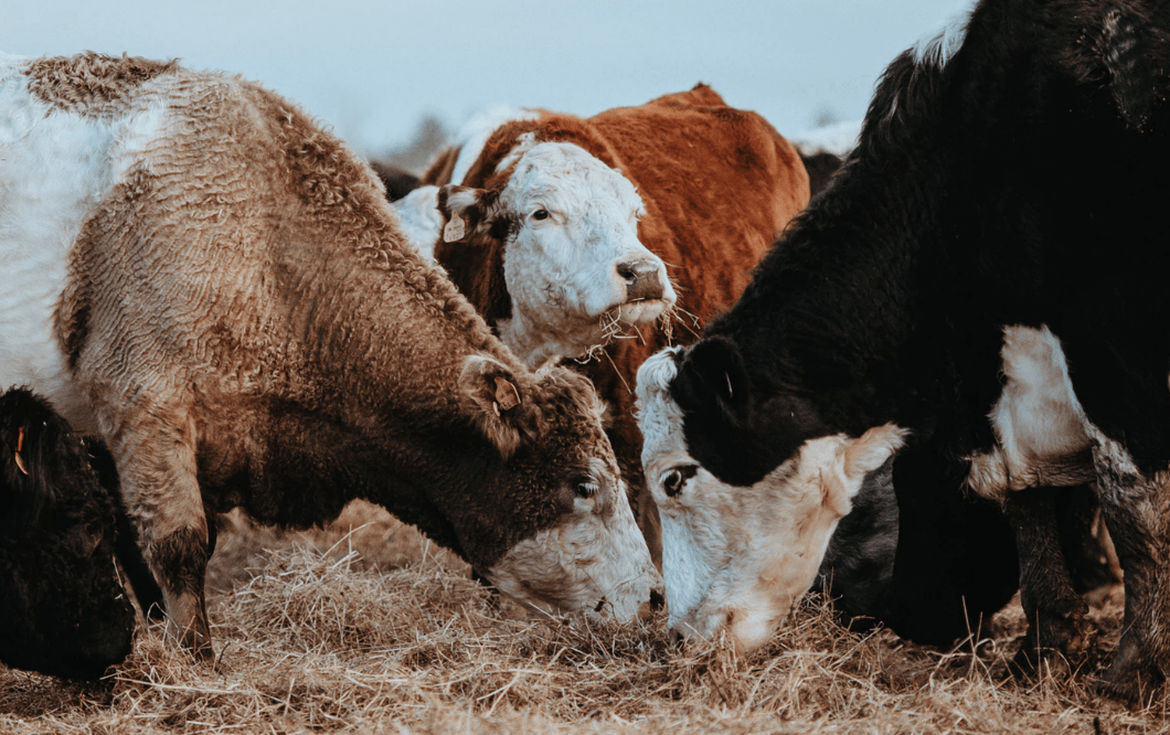 Cash cows in your business model
