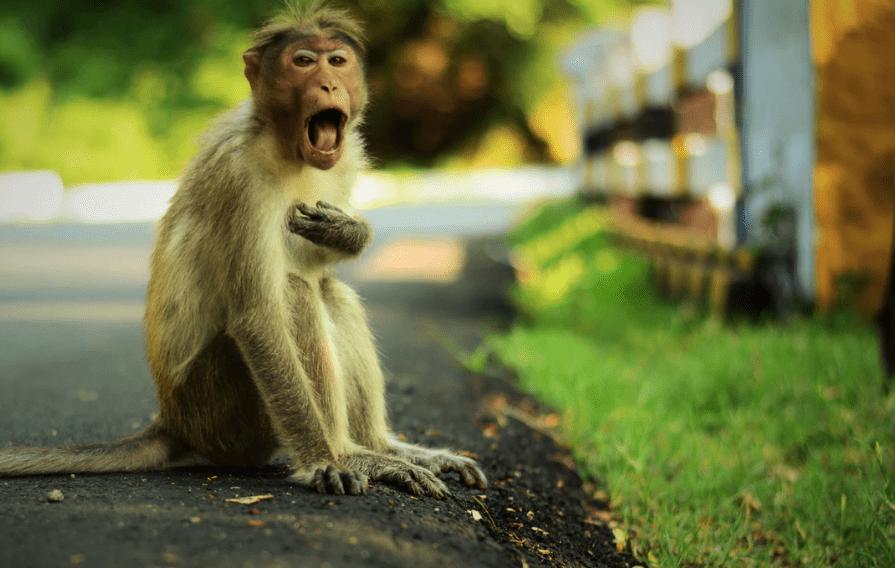 Monkey First