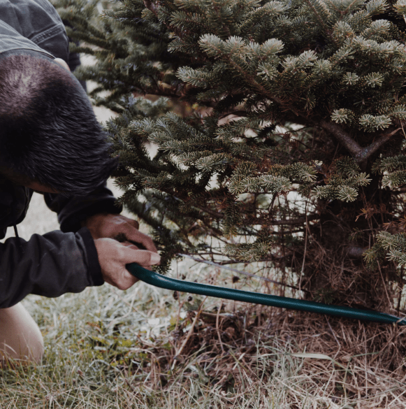 Chopping Down A Tree.png