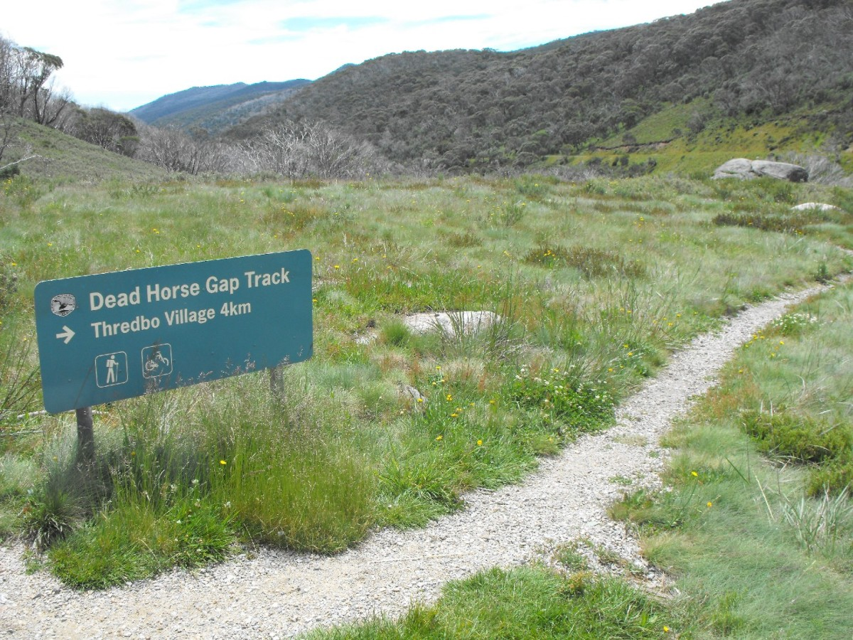 thredbo start dead horse gap walk.jpg