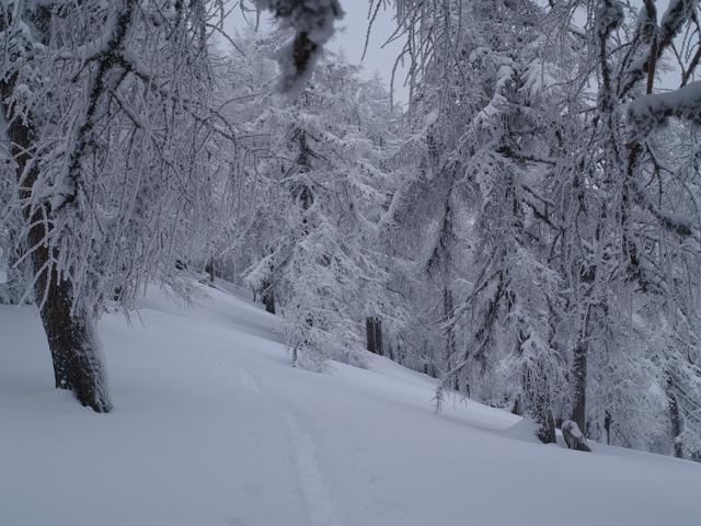 snow_trees.jpg