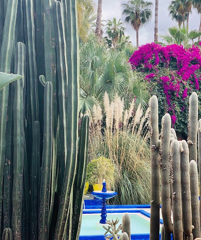 _ when in Marrakech 💙_ . . . . . . #pointofview #federicasanteusanio #lifethroughmyeyes #jardin #marocco #marrakech #travelphotography #travelling #jardinmajorelle #ysl