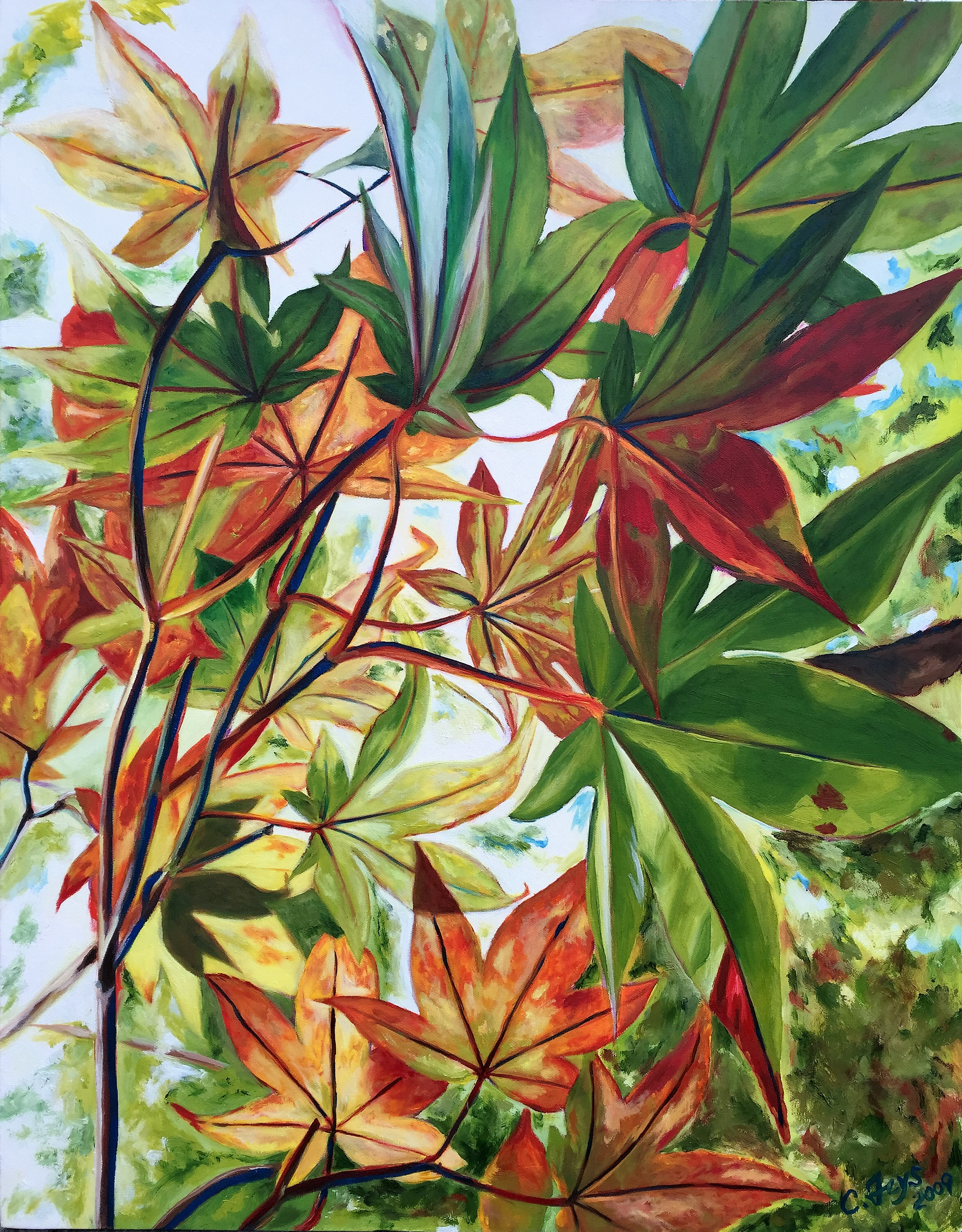 Maple Leave Study 2, 2009