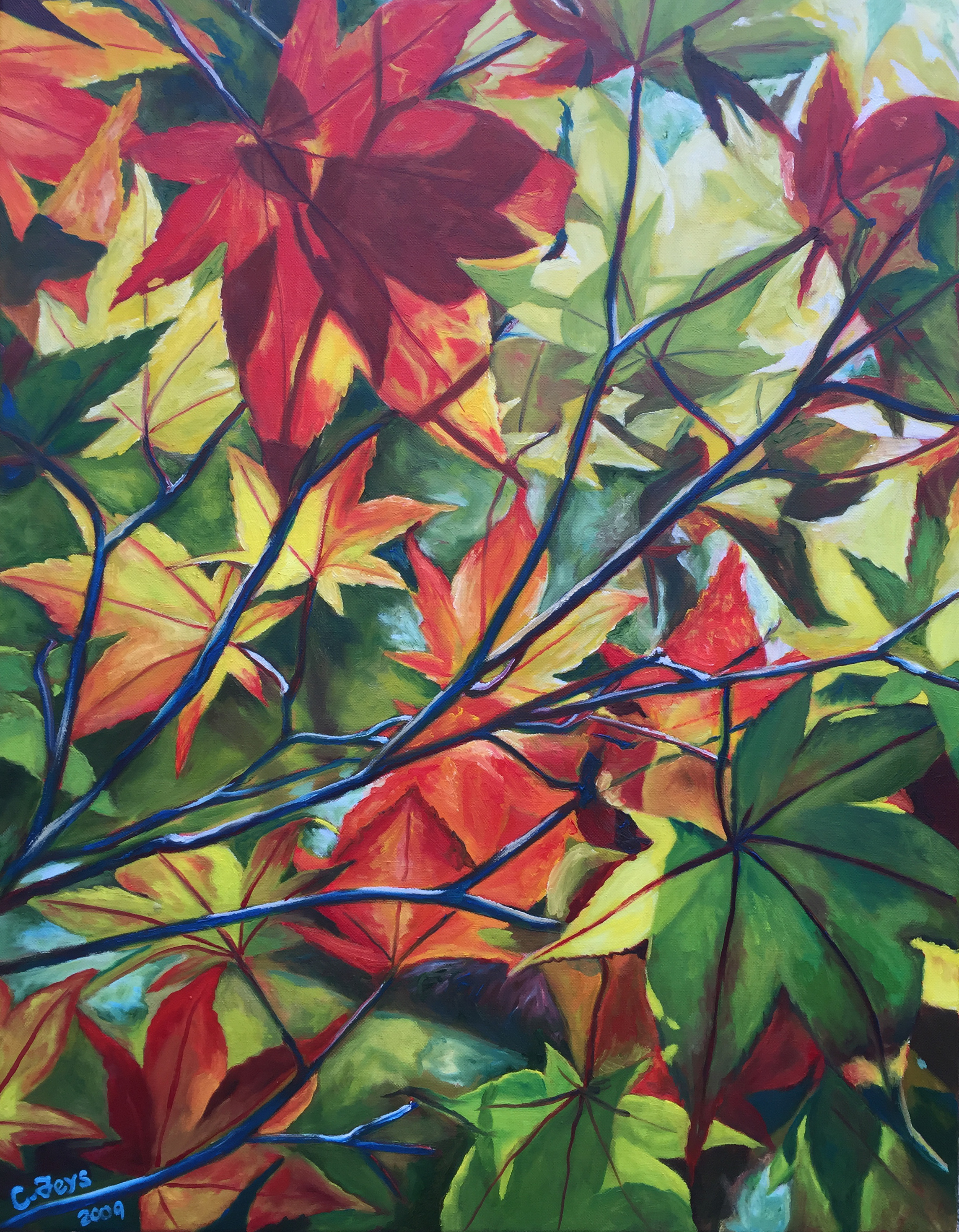 Maple Leave Study 1, 2008
