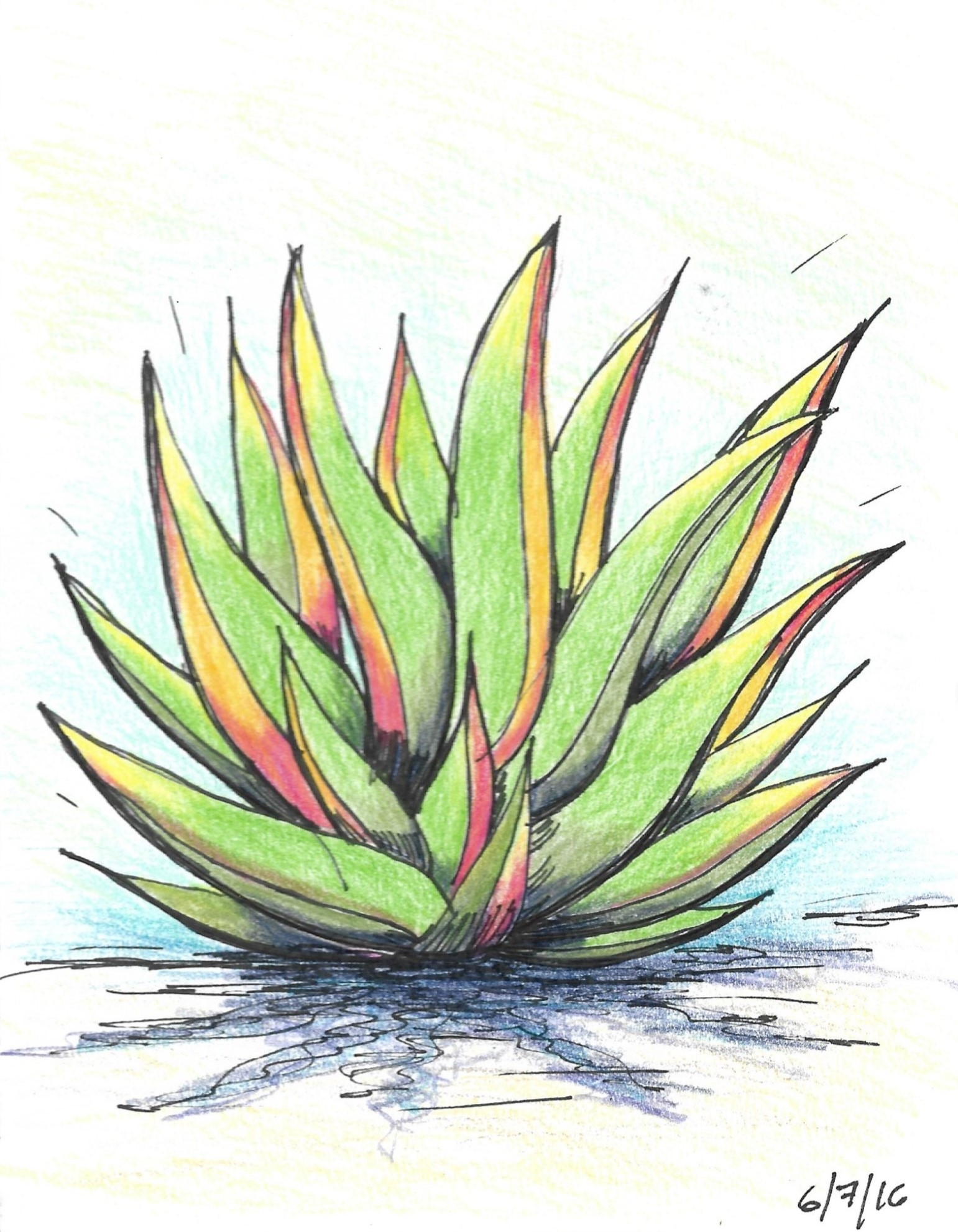 Blue Agave, Mexico