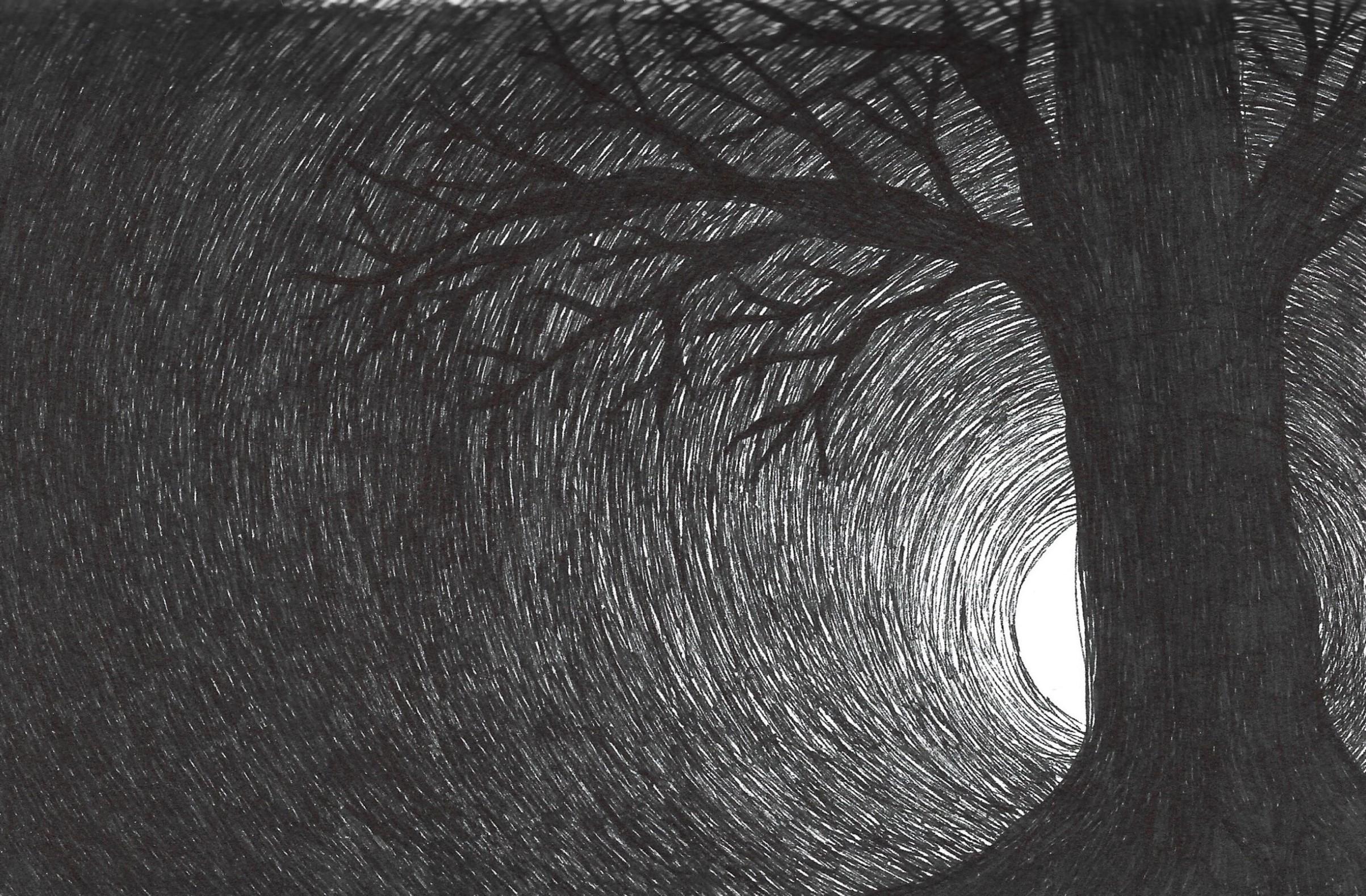 tree at midnight.jpg