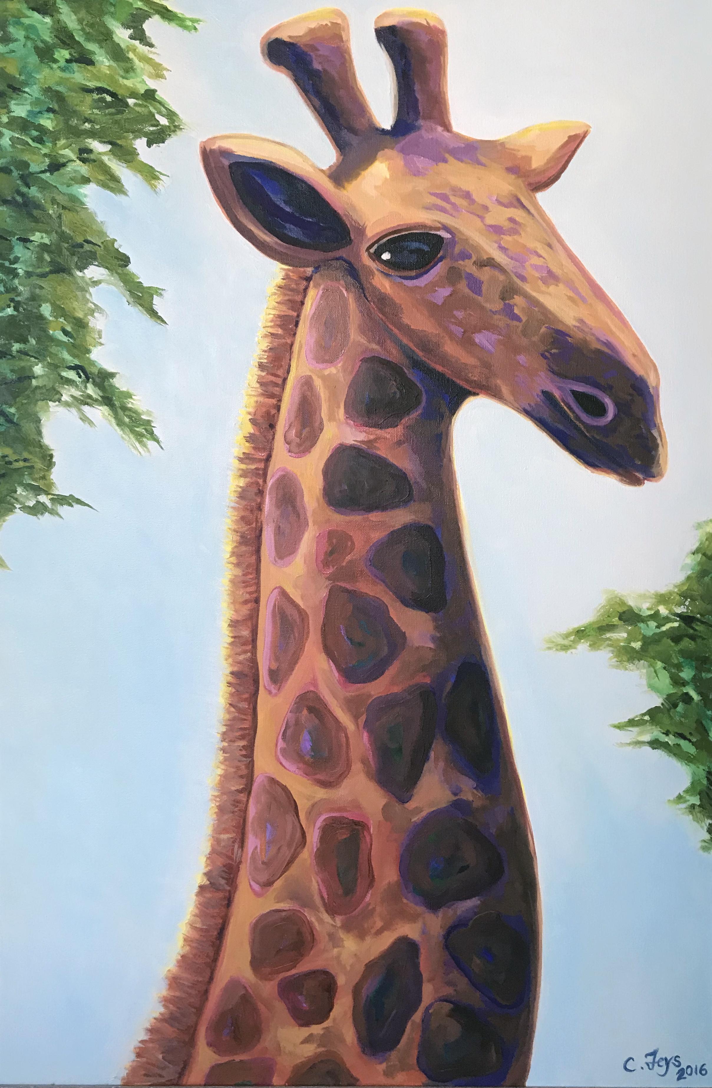 Giraffe, Nakuru Kenya, 2016