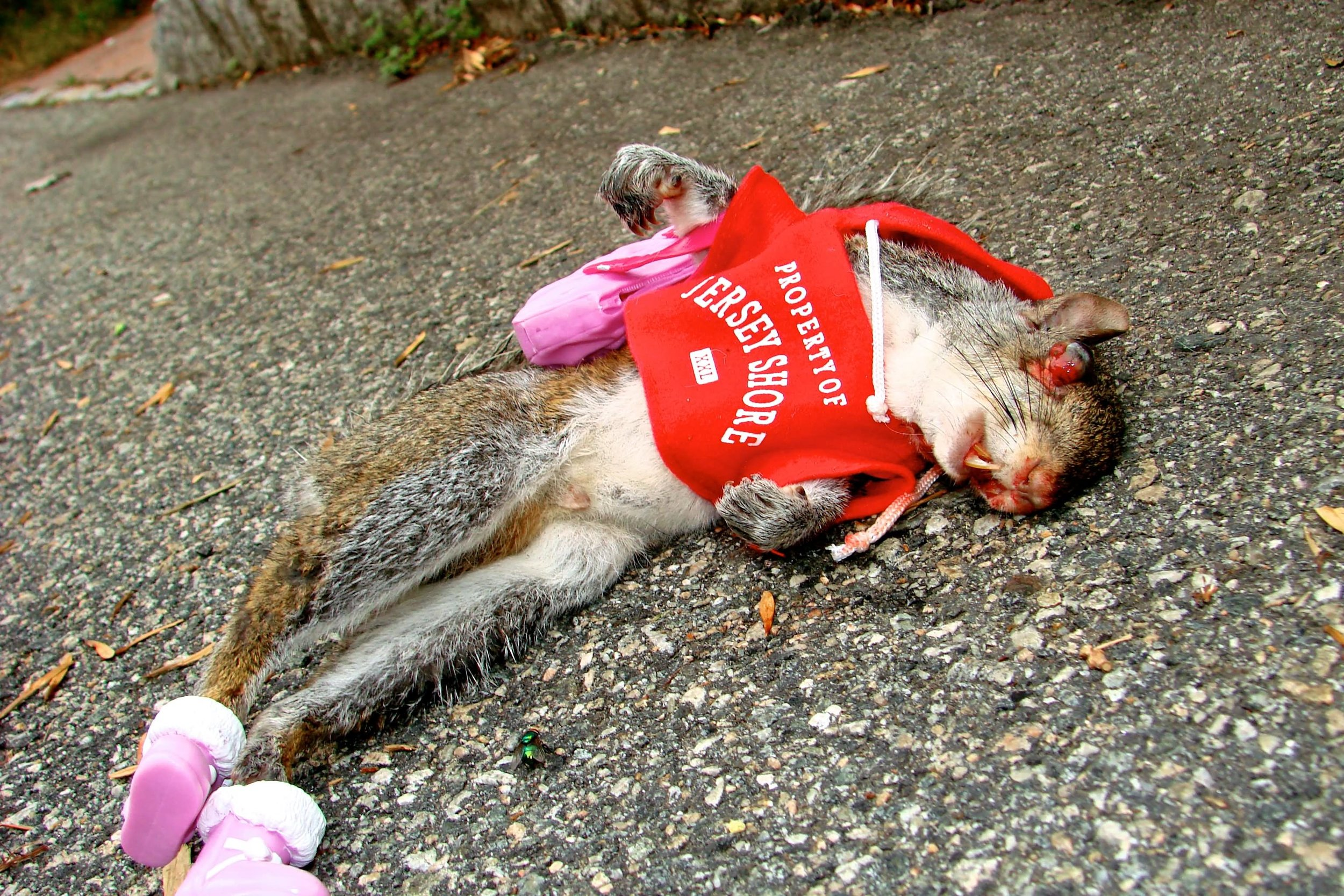 Funny-Squireel-Road-Kill-Image.jpg