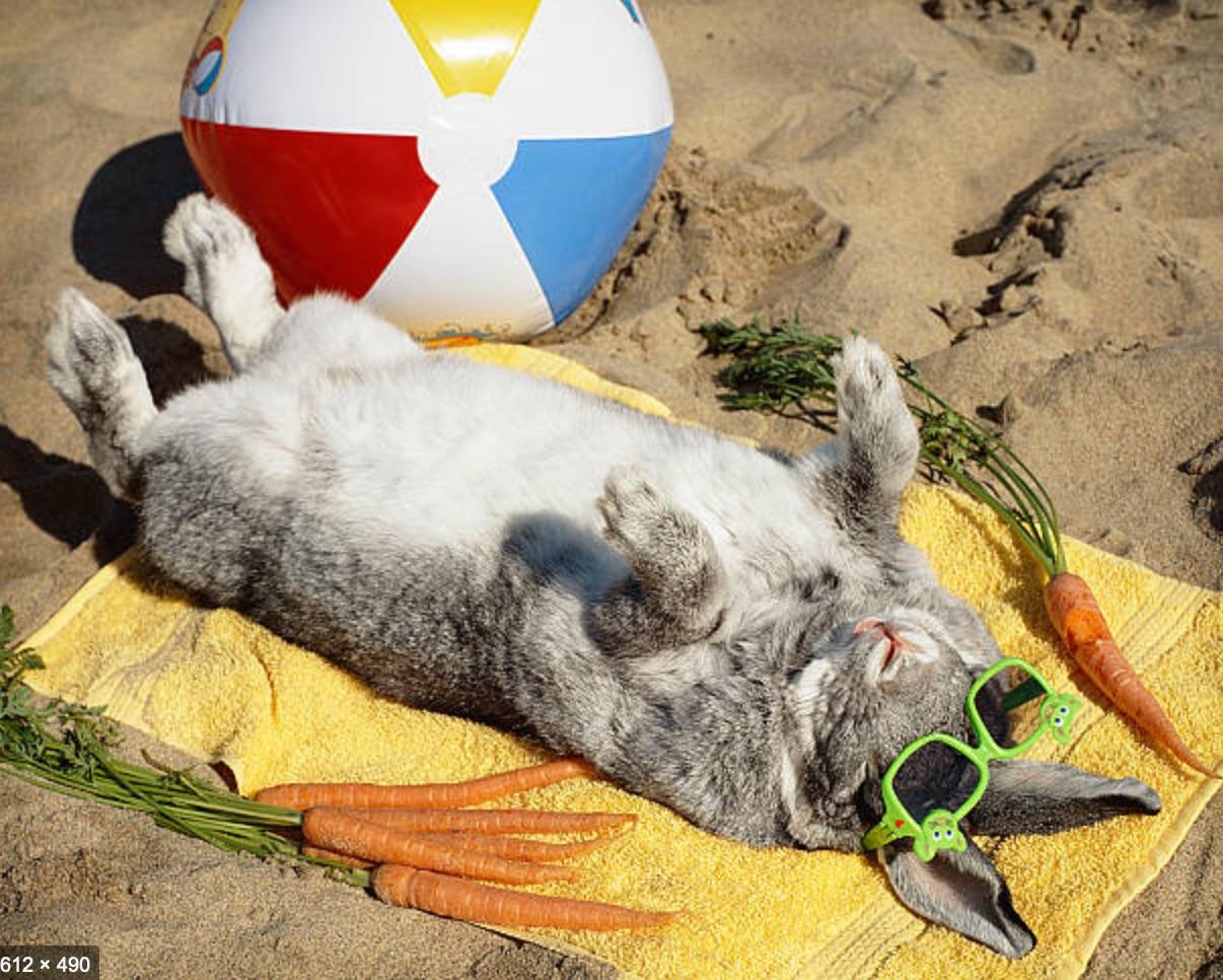 Google_Image_Result_for_https___media_istockphoto_com_photos_sun-bathing-bunny-rabbit-vacations-on-the-beach-picture-id535079607_k_6_m_535079607_s_612x612_w_0_h_YqDdDjcTkr0y_5kZaXvM-KrfuJJnSpSbaY6VA1If6vU_.jpg