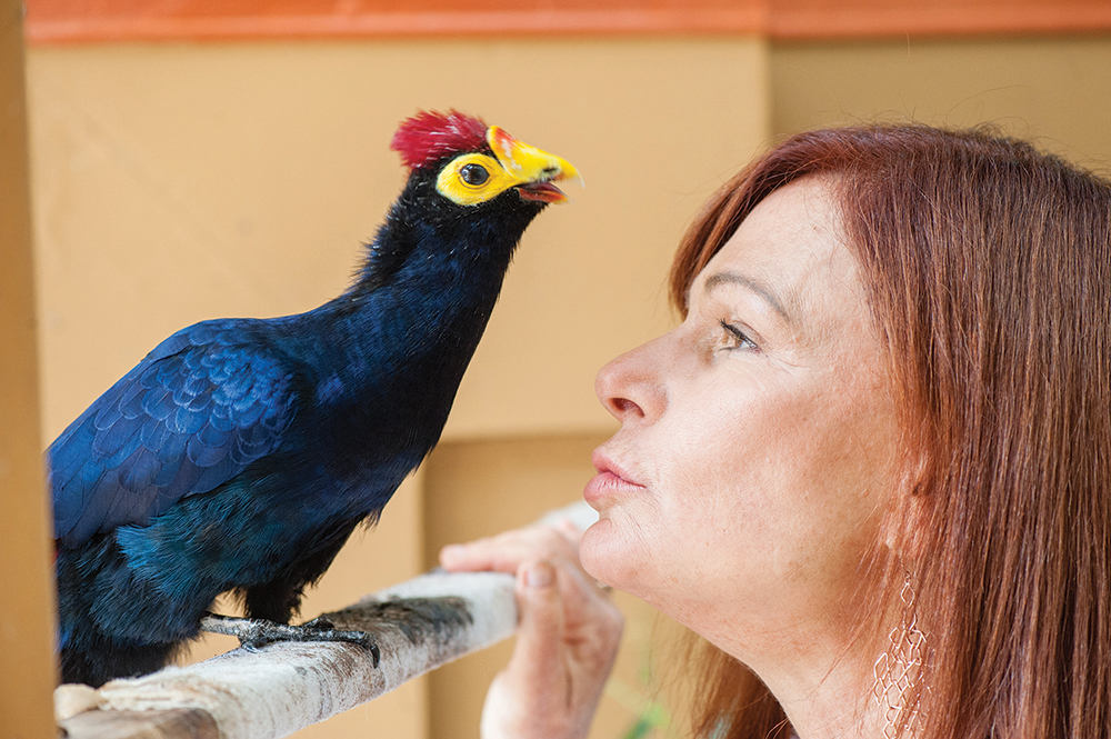 Raffin and Amadeus, a Lady Ross turaco