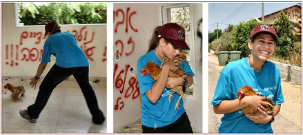 Yafit, Hakol Chai's mobile clinic assistant, rescuing a chicken in Gaza. (photo  by Avi Hirschfield)