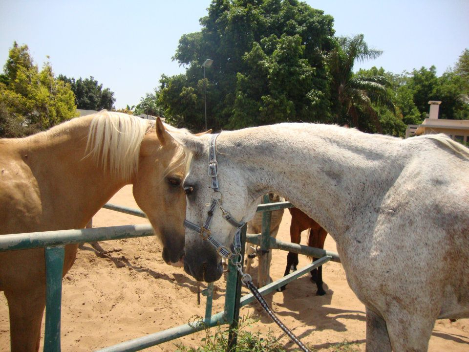 Saturday, a rescued horse, recovered.