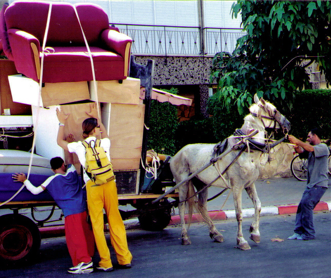 CHAI succeeded in having horse carts banned on city streets in Israel.