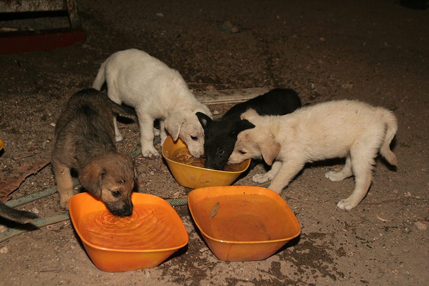 Puppies rescued from a warzone in the north.