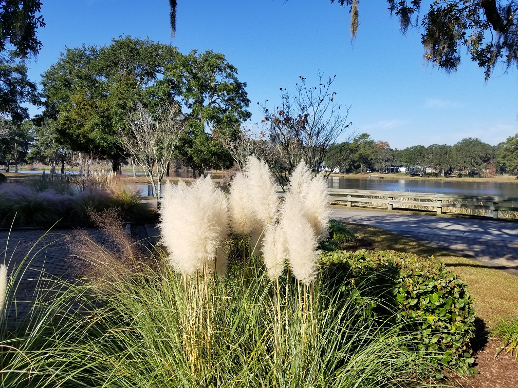 lakeside November pampas.jpg