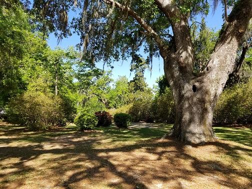 RCC Shady Lawn 3.jpg