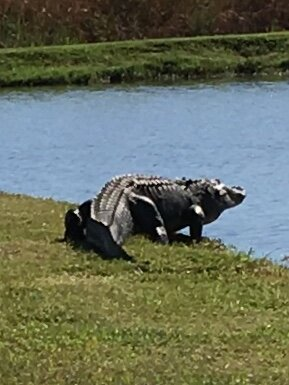 Belle Isle is blessed with an abundance of wildlife. We should remember that sometimes it is dangerous to get too close.