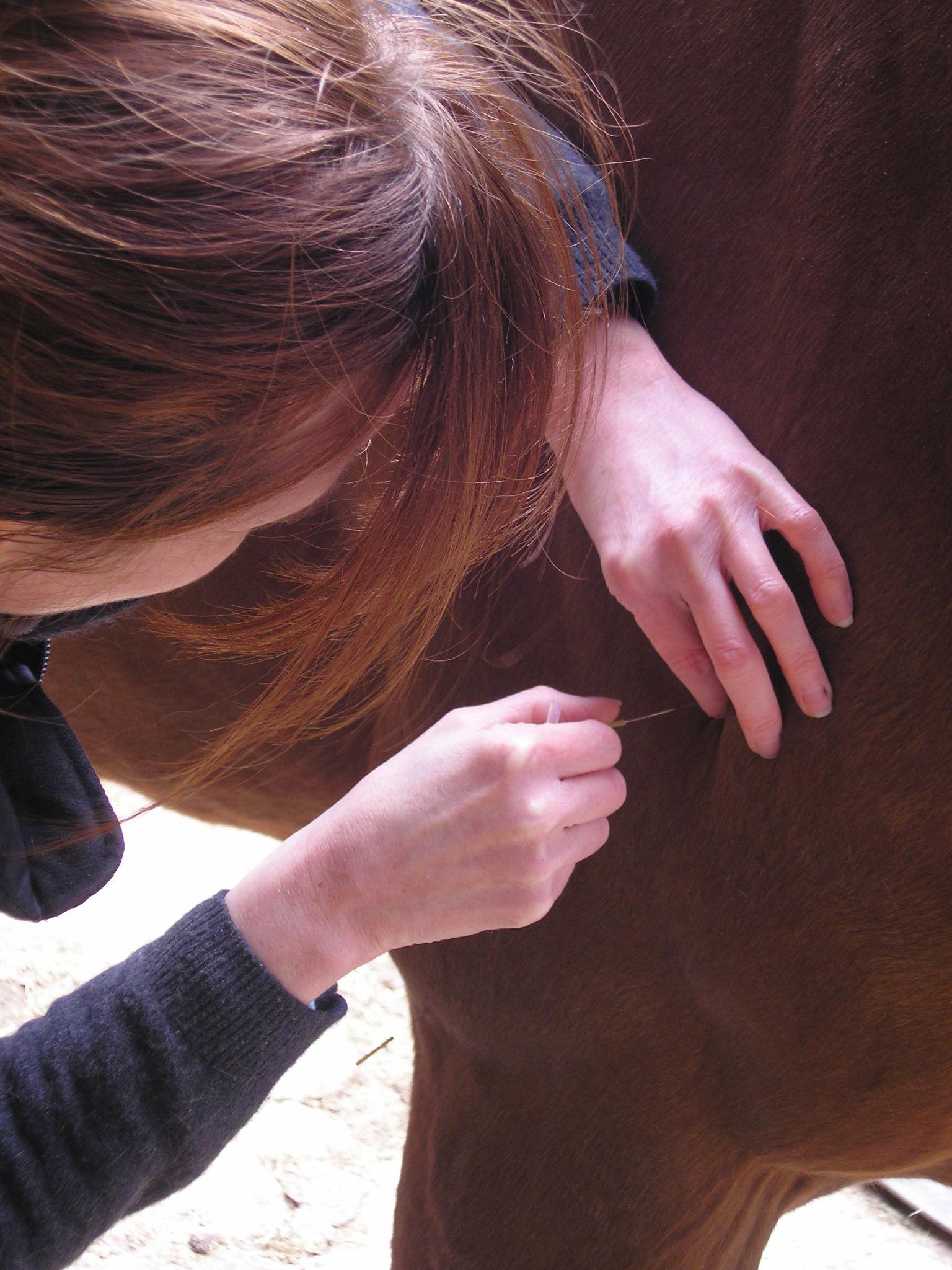 Acupuncture horse 8.JPG
