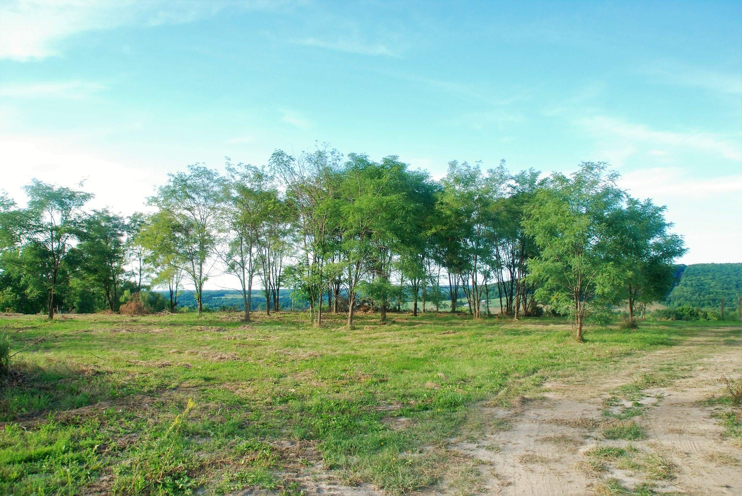 New Land 1.jpg