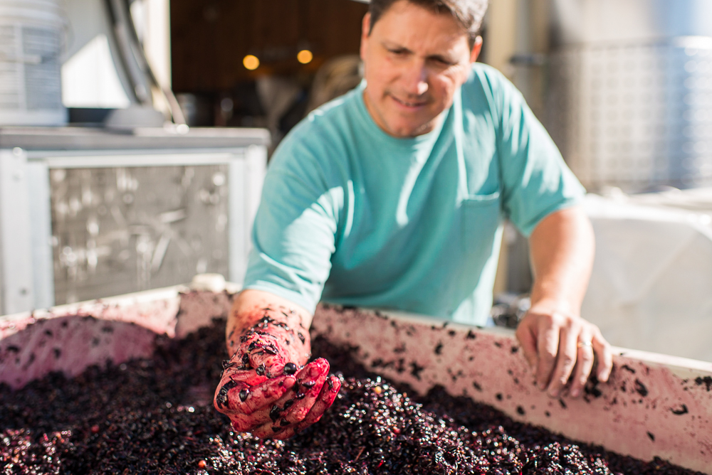 Vine to Wine Tours