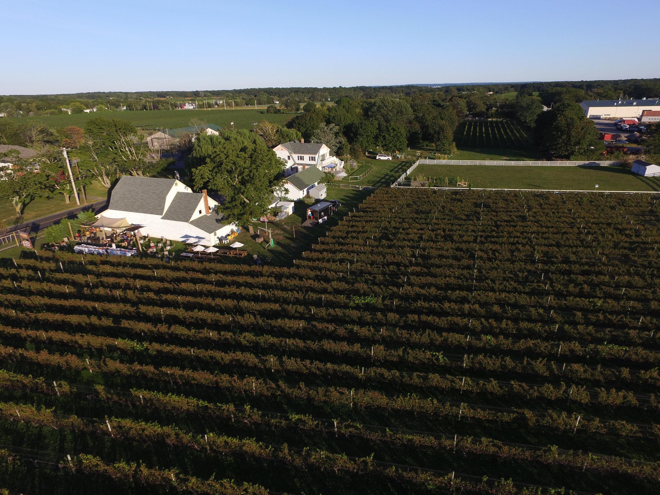 aerial image of the vineyard.jpg