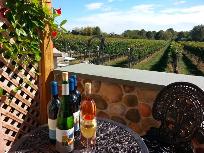 wine bottles with vineyard in the barckground. png