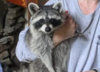 Local urban wildlife rescue organizations