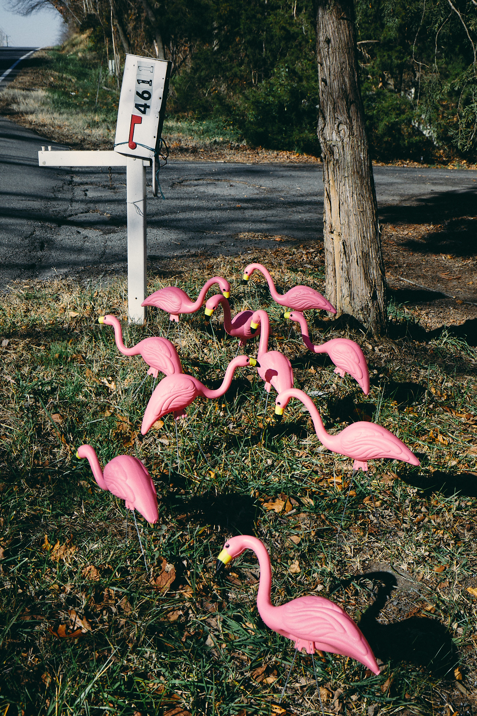 Posted Flamingos