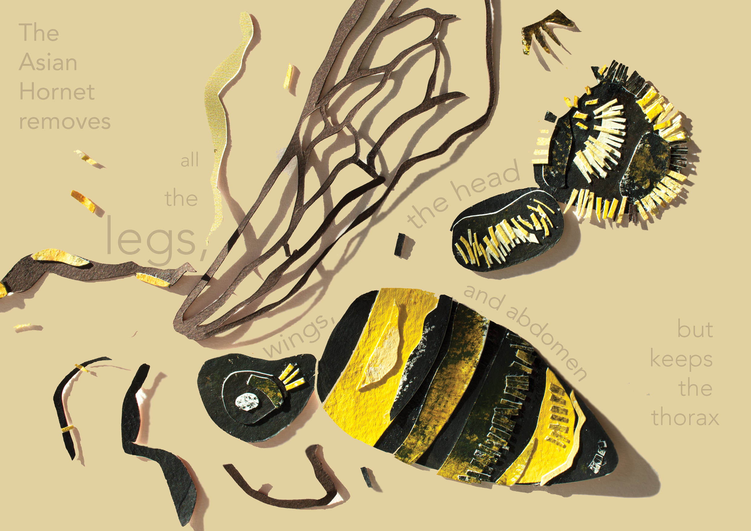bee pages 6.jpg