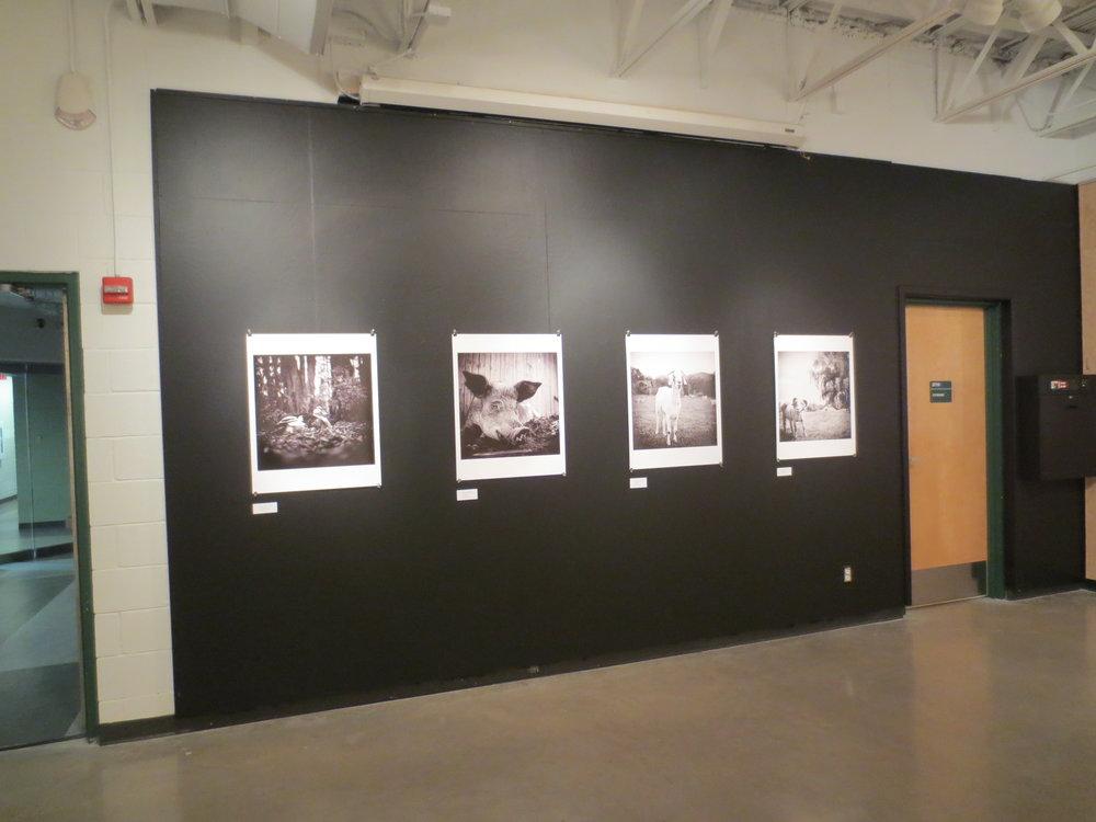 STC Bldg B Art Gallery #3