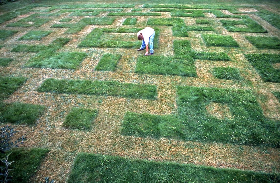 lawnwork2.jpg