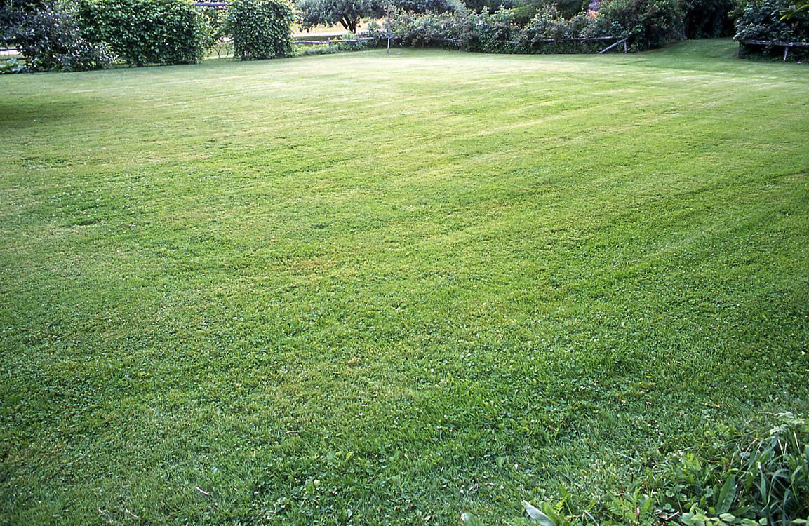 lawnwork1.jpg