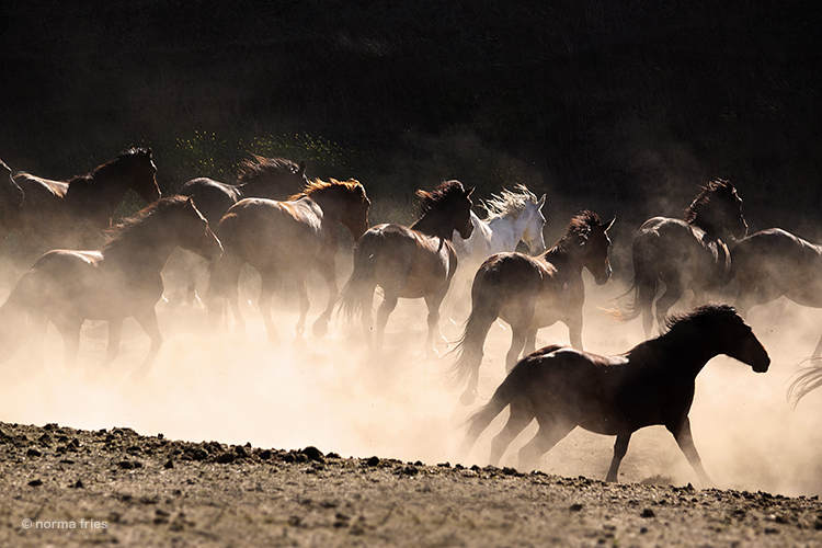 """WH104: """"Gray Mare herd kicks up the dust"""""""